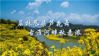 【醉美秋景】层林尽染芦花舞 古淮河畔秋意浓